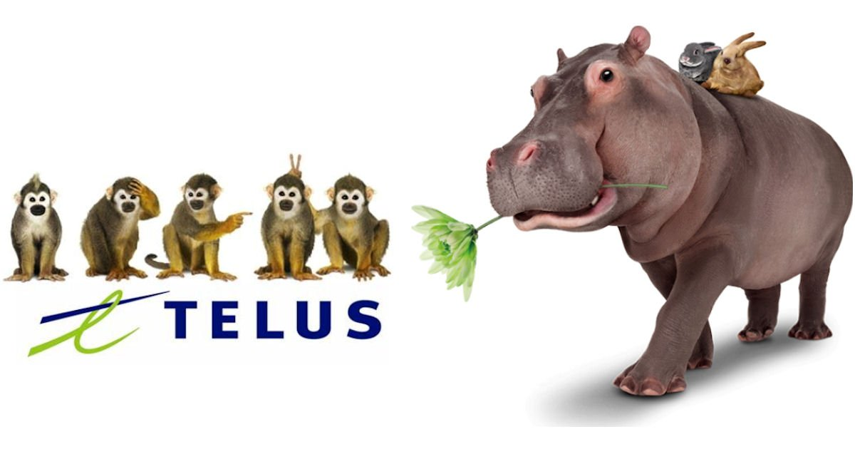 free 2018 telus calendar free product samples
